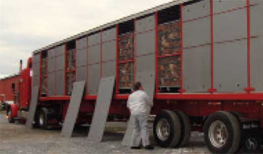 image of chicken transportation truck